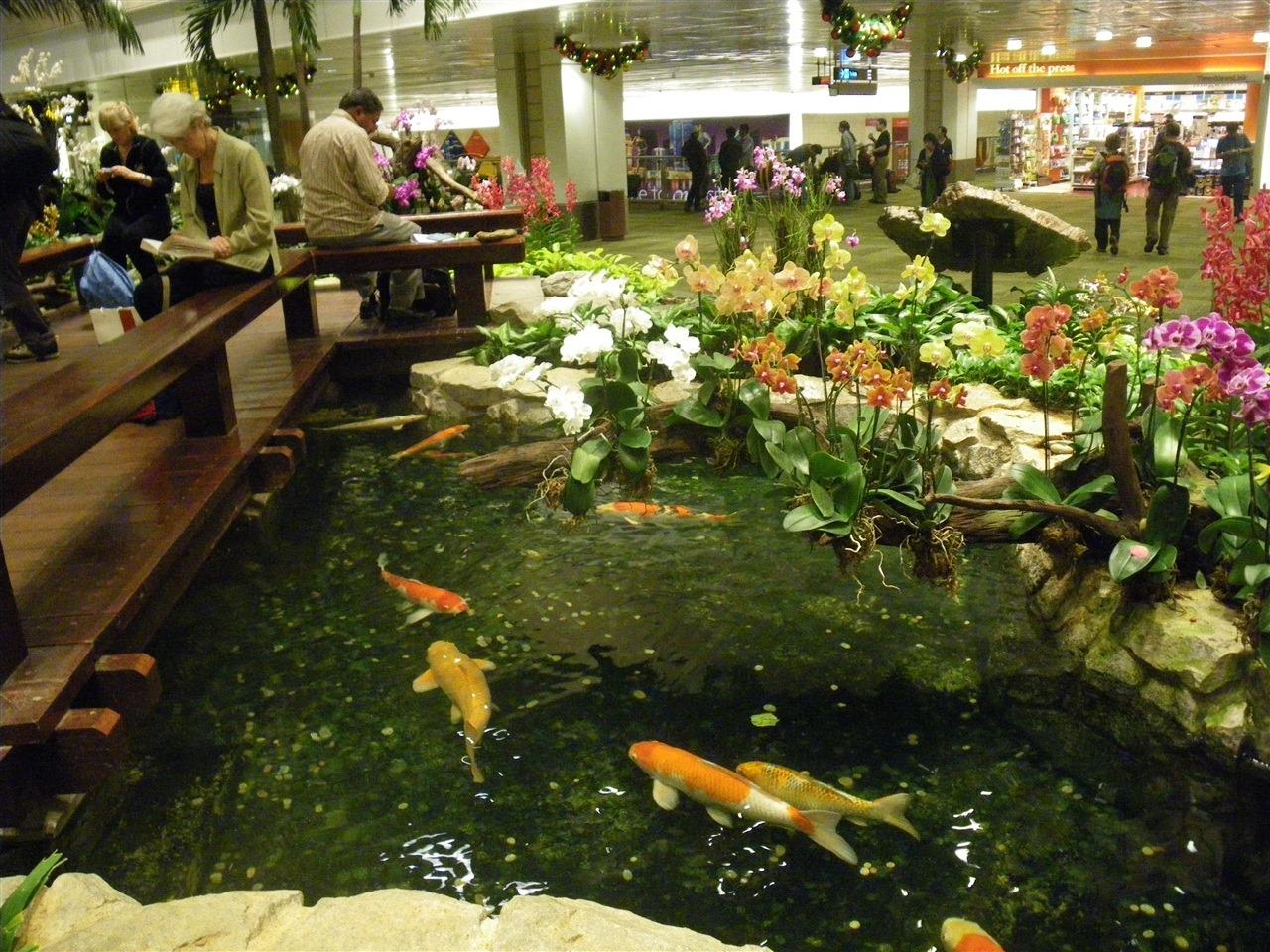 Day 3 the singapore sleepover dc rainmaker for Amazing koi ponds