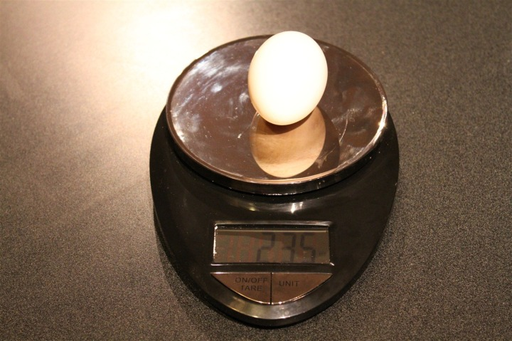 Egg weight on scale