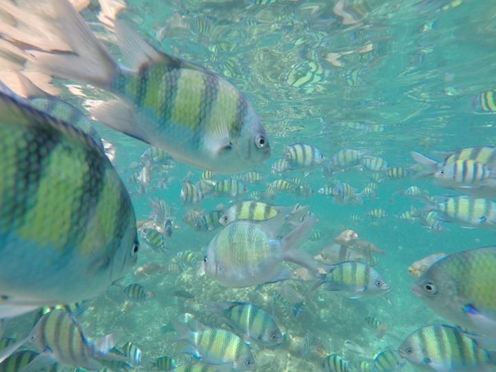 GoPro-Hero4-Underwater-FlatGlass