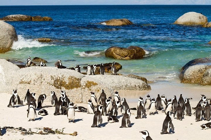 CapeTownPenguins
